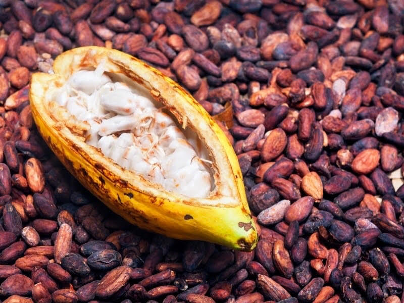 Cacao pod and seeds
