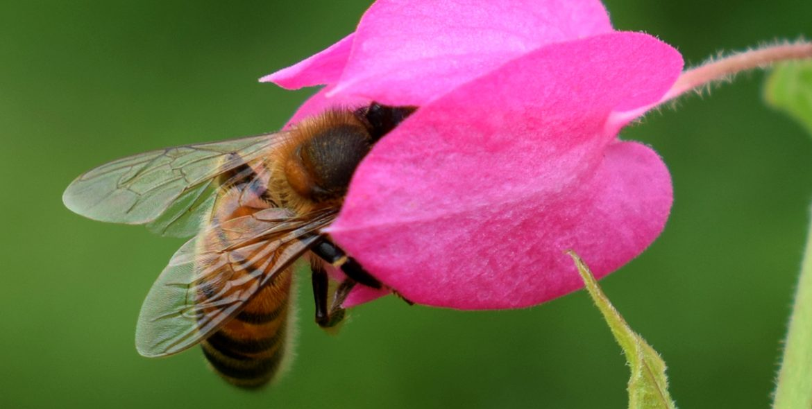 World Honey Bee Day