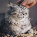 A Happy Cat Being Pet
